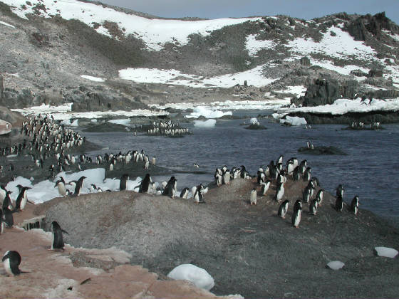 penguin_swimming_hole.jpg
